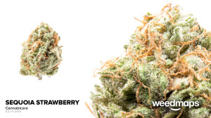sequoia-strawberry