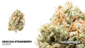 sequoia-strawberry
