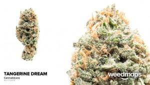 large_tangerine_dream